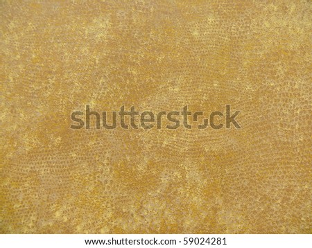 elegant exotic spots autumn fashionable damask close up. More of this motif & more backgrounds in my port. - stock photo