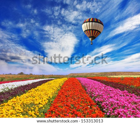 Elegant multi-color rural fields with flowers. Over field the huge air balloon flies - stock photo