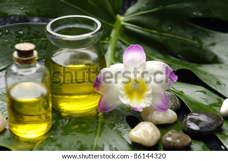 Elegant Orchid and massage oil and stones on green monstera leaf - stock photo