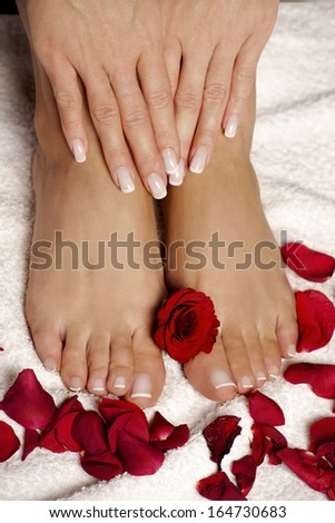 Elegant roses manicured hand and pedicured feet - stock photo