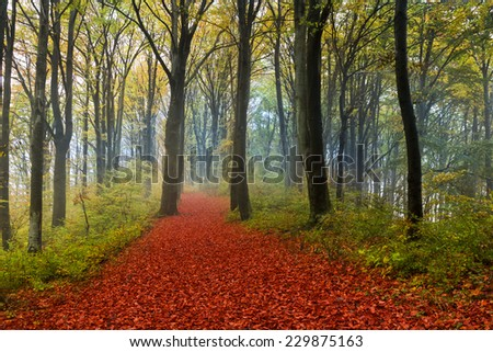 Elegant trail in the forest during autumn. Red leaves on the ground and a thin wave of mist in the background - stock photo