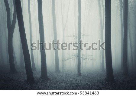 elegant tree in a cold forest - stock photo