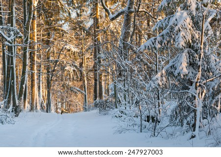 Elegant winter landscape with snow-covered trees and lonely ski track. - stock photo