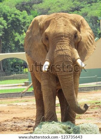 Elephant. - stock photo