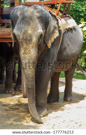 Elephant. - stock photo