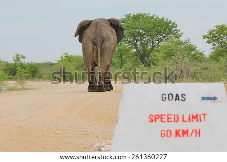 Elephant, African - Wildlife Background - Speed in Nature - stock photo