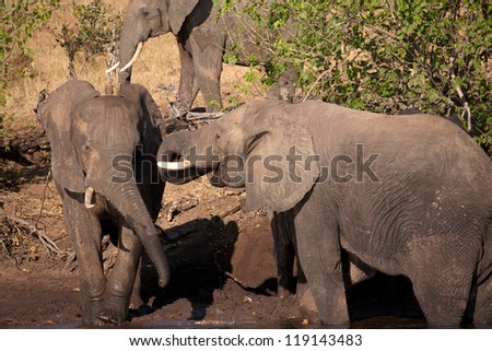 elephant are playing - stock photo