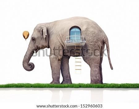 elephant as a house. creative concept - stock photo