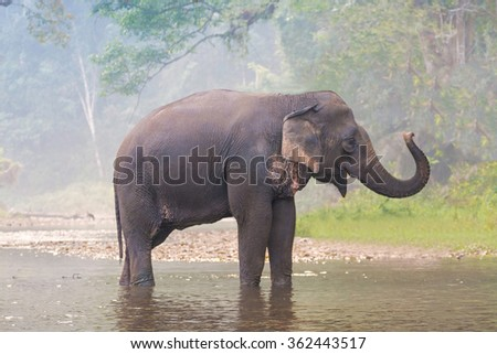 Elephant at a river in a deep forest - stock photo