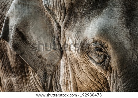 Elephant close up seeing skin texture and spots  - stock photo