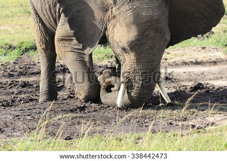Elephant closed up - Massai Mara, Kenya - stock photo