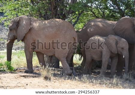 Elephant, Etosha National Park, Namibia, Africa - stock photo