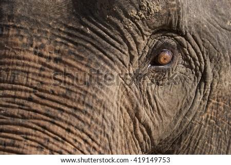 Elephant eye. Sad and aged eye of elephant - stock photo