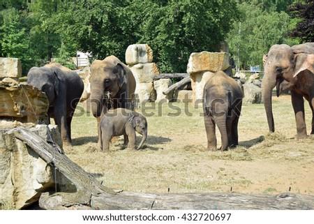 Elephant family. baby elephant  - stock photo
