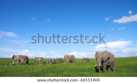 Elephant family feeding in the open plains of East Africa - stock photo