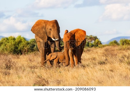 Elephant family in Samburu National Reserve, Kenya - stock photo