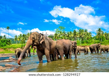 Elephant group in the river - stock photo
