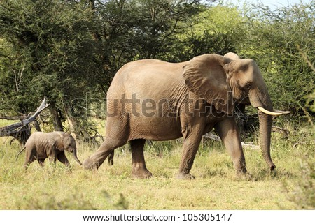 Elephant group on the move with young calves - stock photo