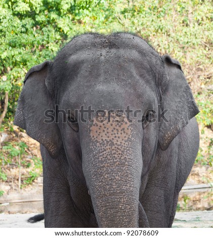 Elephant in a zoo - stock photo