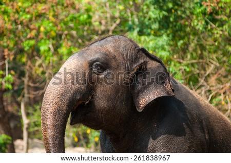 elephant  in  green open zoo - stock photo
