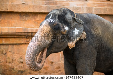 Elephant in Indian temple. Tamil Nadu - stock photo