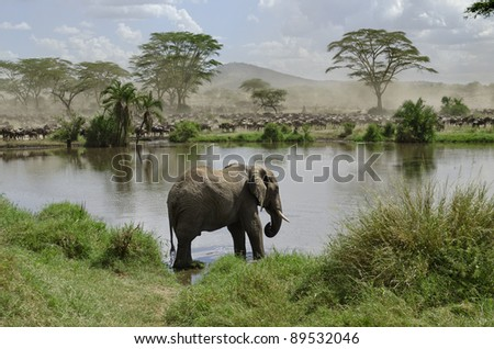 Elephant in river in Serengeti National Park, Tanzania, Africa - stock photo