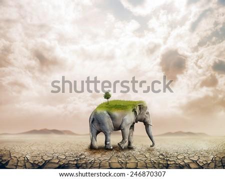 Elephant in the desert - stock photo