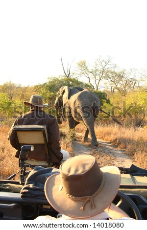 Elephant in the Sabi Sand Reserve - stock photo