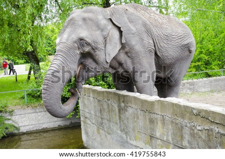 Elephant in the zoo - stock photo