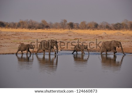 Elephant March - stock photo