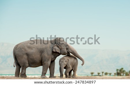 elephant mother and baby on a nature with mountains on background - stock photo
