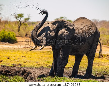 Elephant mud splash on african sunny day - stock photo