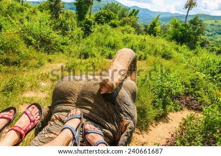 Elephant ride, feet of two people on the head of an elephant in the wild jungle - stock photo