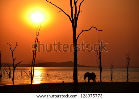 Elephant Silhouette in African Sunset over Lake Kariba Zimbabwe - stock photo