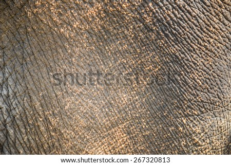 Elephant skin texture abstract background. - stock photo