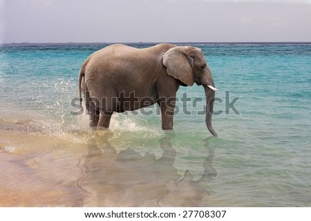 Elephant stands in ocean at shoreline - stock photo