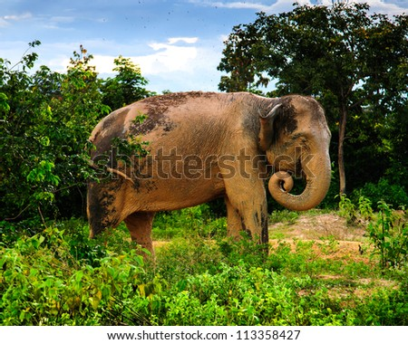 elephant thailand - stock photo