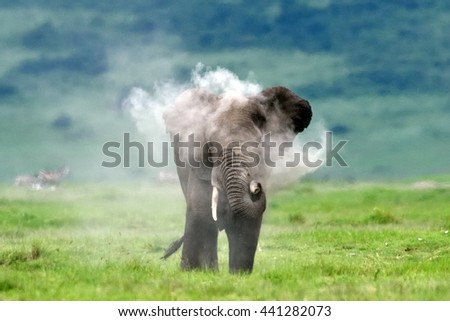 Elephant throwing dust at himself - stock photo