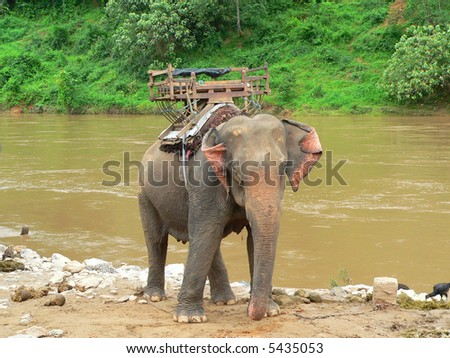 elephant used as a trasport, thailand - stock photo