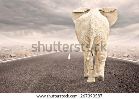 elephant walking to the horizon on asphalt road - stock photo