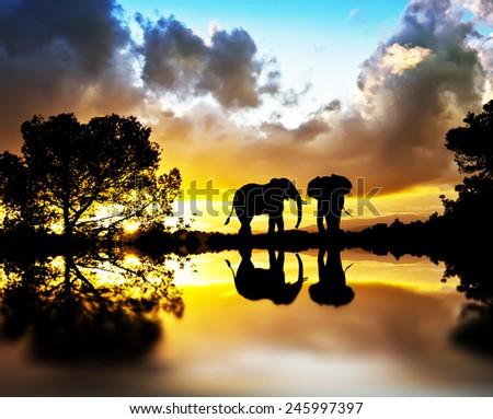 elephants between plants Lake - stock photo
