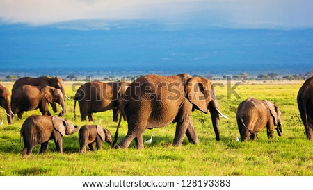Elephants family and herd on African savanna. Safari in Amboseli, Kenya, Africa - stock photo