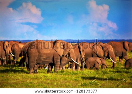 Elephants herd on African savanna. Safari in Amboseli, Kenya, Africa - stock photo