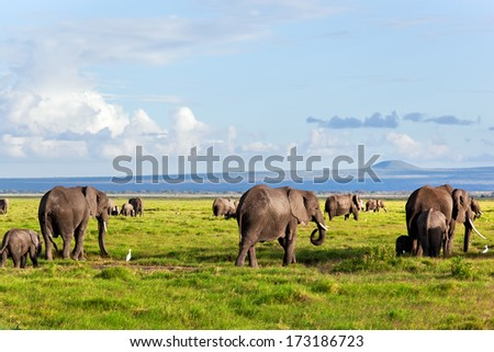 Elephants herd on African savanna walking towards Mount Kilimanjaro. Safari in Amboseli, Kenya, Africa - stock photo