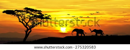 Elephants in the field - stock photo