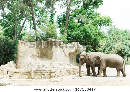 Elephants next to some water in a sunny zoo - stock photo