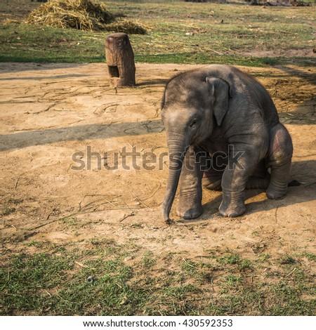 Elephants on a farm in Chitwan reserve - stock photo