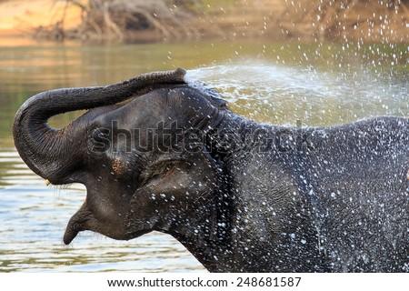 Elephants take a bath in Kwae-noi river. Kanchanaburi, Thailand - stock photo