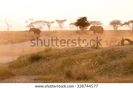 elephants walking in the distance throught the landscape of a african wildpak at sunset - stock photo