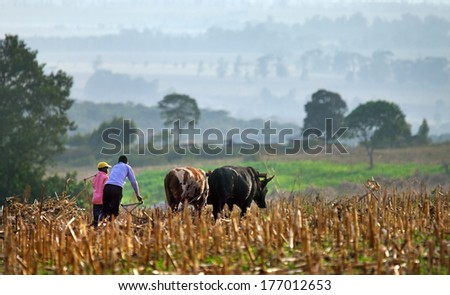 ELGON, KENYA -JANUARY 04 : Farmers plows  field on January 04, 2013  near Mount Elgon National Park, Kenya.   - stock photo
